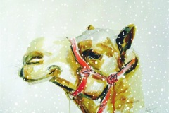 christmas-card-millie-camel-with-snow-2019